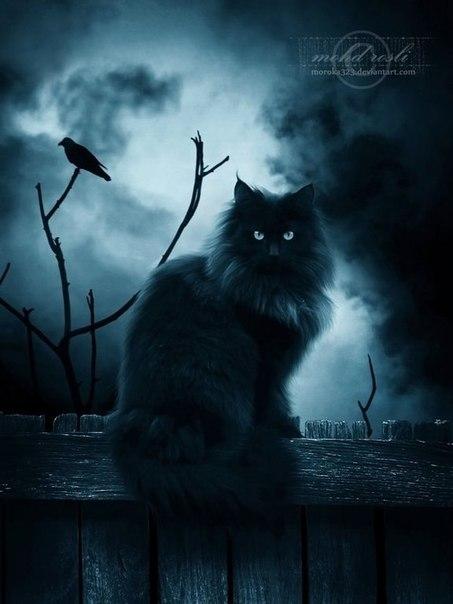 Мистический кот от фотографа Rosli (ник moroka323)
