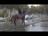 лошадь танцует лезгинку 2014 - horse dancing lezginka