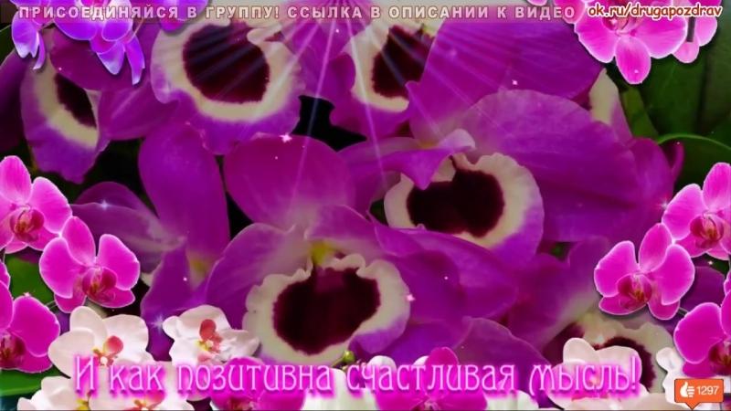 Прими орхидеи они так прекрасны бесплатный музыкальный подарок