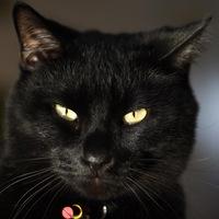 Анкета Чёрный Кот
