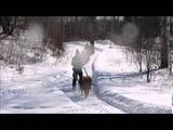 Mars 2015 - Pony Joering - Horse Sledding - Ski Galop
