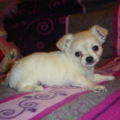 Объявления томск куплю щенка дать объявление в курске и курской области
