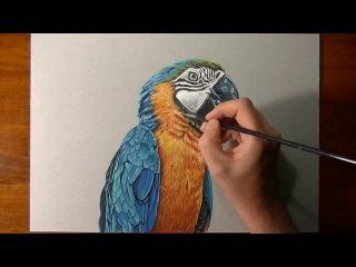 Как нарисовать / Попугая / Птицу / Попугай