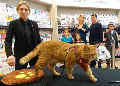 Уличный кот по имени боб street cat named bob