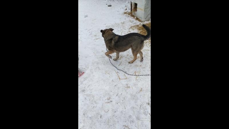 Ищет дом собака