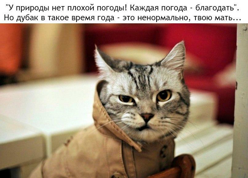 ГОВОРИМ ОБО ВСЕМ - Страница 39 DMAgl2GMj6Y
