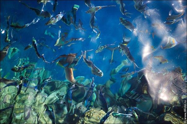 наливные полы 3d фото цена за 1 кв м в оренбурге