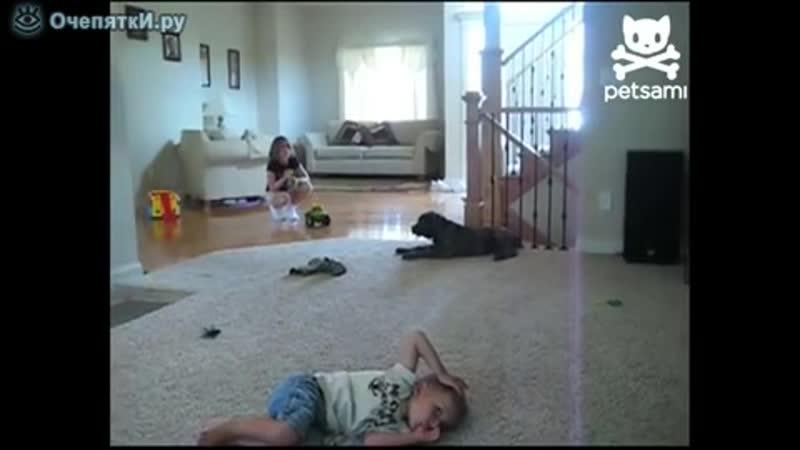 Неуклюжий пёсик сел на малыша