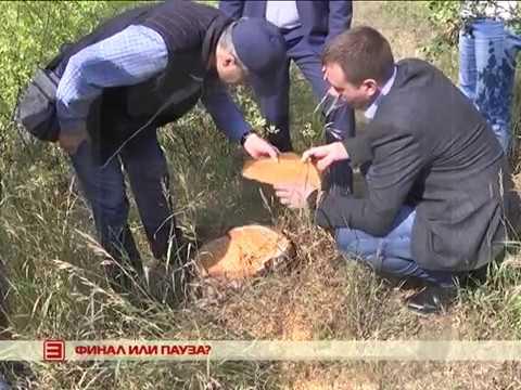 Спил деревьев во дворах остановлен депутатами