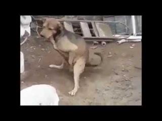 Собака стреляет Хит 2014
