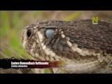 Dominic Monaghan - Snakes,Spiders,Scorpions (Доминик Монаган - Змеи,Пауки,Скорпионы)