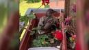 ВБерлине набалконе одного издомов поселилась утка Новости Первый канал