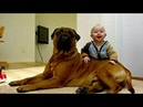 Собаки защищают детей 2 Dogs protect children 2