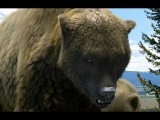 Ice Age Giants : Land of the Cave-Bear Series 1 episode 2 BBC full documentary