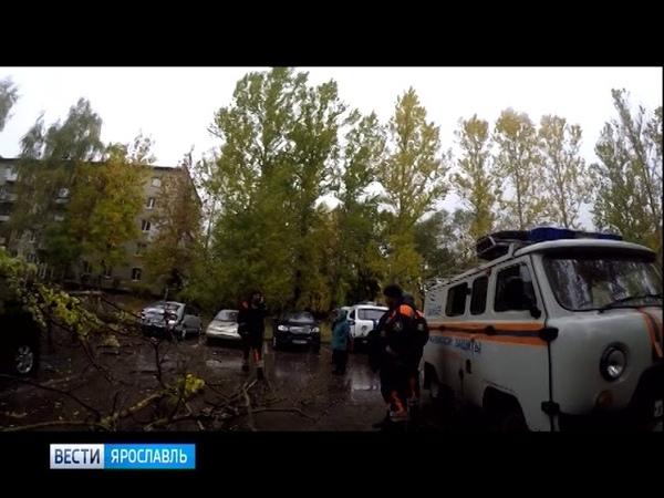 Спасатели ЦГЗ освободили машину из-под упавшего в Ярославле дерева