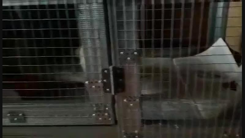 альбинка