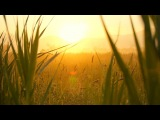 Relaxing Instrumental Music - slow soft peaceful - relaxdaily N°071