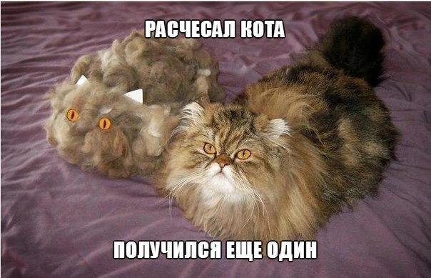 http://cs14108.vk.me/c320621/v320621864/6809/seFfX9bL48o.jpg