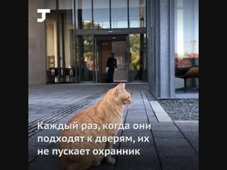 Коты два года пытаются попасть в музей в Японии— пока безуспешно.