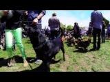 Фестиваль собак Dog Fest 2013 в Сан-Франциско. Реалити-шоу