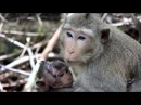 Son Monkey Poor To Mom