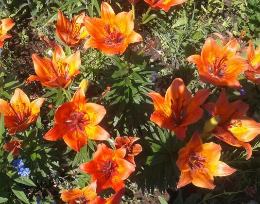 Цветы у Ликки T_L3lrl0V88