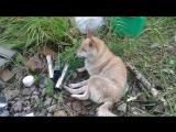 Поездка за хариусом на речку Ульвичь с Максимом и собаками Яриком и Зинкой в поездке использовали палатку Зима Лето и печку