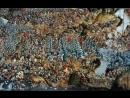 Battle of Orsha 1514 Стары Ольса Бітва пад Воршай