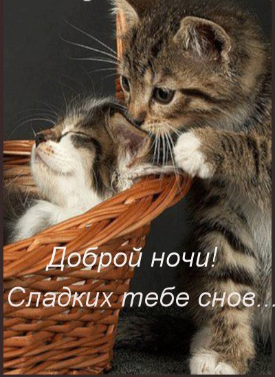 картинка сладких снов милый