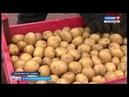 Астраханские земледельцы осваивают новые сорта ягод и овощей