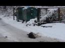 Мисливці за бездомними псами травлять їжу ізоніазідом