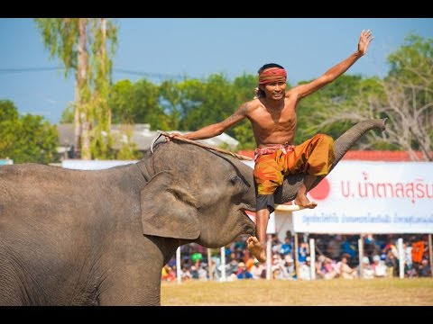 World's Largest Elephant Festival in Surin Thailand - 4K!