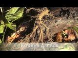 За дягилем в устье Шумерлинки 18 октября 2013