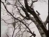 Документальный фильм. Молога - Затопленный город