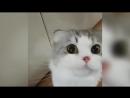 ПРИКОЛЫ С КОТАМИ-МИЛЫЕ КОТЯТА JOKES WITH CATS - LITTLE KITTENS
