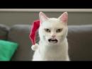 V-s.mobiПоющий йодлем рождественский кот .mp4
