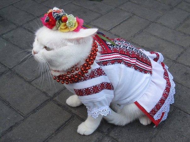 """""""Носить ее нужно не один раз в год"""": украинцы отметили День вышиванки - Цензор.НЕТ 4345"""