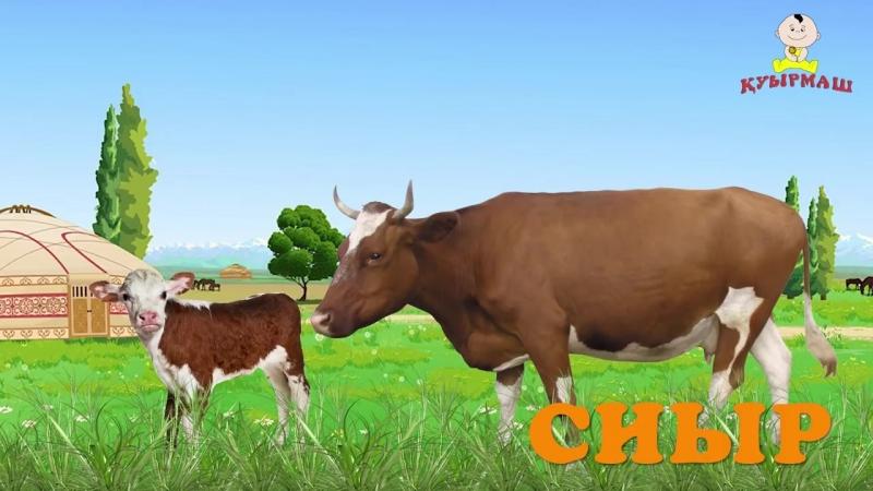 Төрт түлік Домашние животные на казахском Introduce children to four kinds of