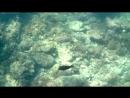 Крымское море Stilidea 02