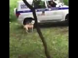 Мусора застрелили собаку