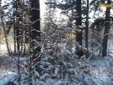 Фильм про охотника на соболя Александра Зубова, ч.3.flv