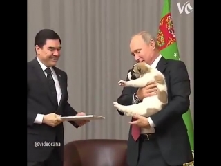 Putin und hunde