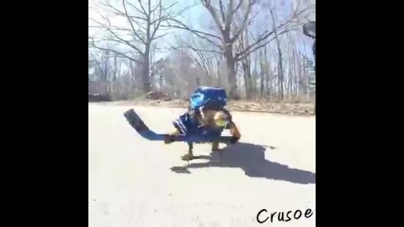 Crusoe__Oakley_Dachshund_Play_Ball_Hocke.mp4
