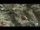 Leticia Sabater es enterrada