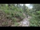 Дорога вниз через лес