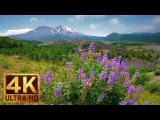 4K Nature Video - 3 Hours of Flowers, Mountains and Birds Sounds - Hummocks Trail, Mt. St. Helens