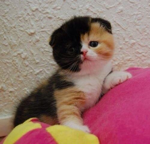Говорят когда кошки разноцветные они приносят счастья