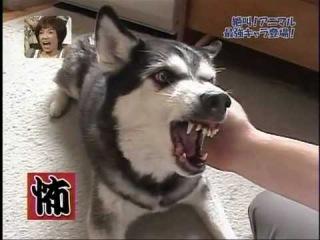 Собаки умеющие делать страшные рожи