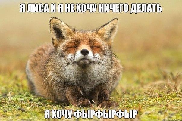 http://cs402725.userapi.com/v402725565/2ee3/ysnLKfA2tUc.jpg