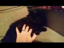 профессионально мешаем кошке умываться